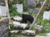 zoo_25