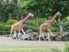 zoo_27