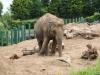 zoo_33