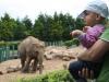 zoo_34