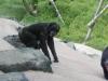 zoo_42