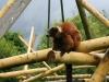 zoo_48
